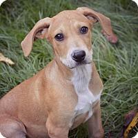 Adopt A Pet :: Farley - Glastonbury, CT