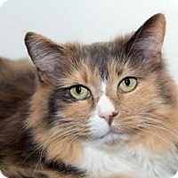 Adopt A Pet :: Lucky - Lowell, MA