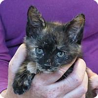 Adopt A Pet :: Sabrina - Unionville, PA
