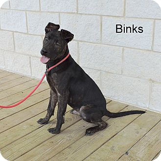 Plott Hound Mix Puppy for adoption in Slidell, Louisiana - Binks