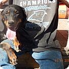 Adopt A Pet :: Raleigh (60 lb) Video!
