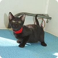 Adopt A Pet :: Clara - Englewood, FL