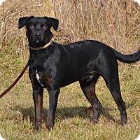 Adopt A Pet :: Rosco - Lebanon, MO