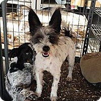 Adopt A Pet :: Bingo - San Dimas, CA