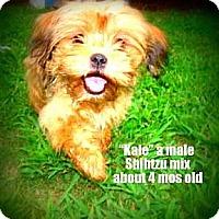 Adopt A Pet :: Kale - Gadsden, AL