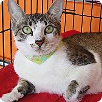 Adopt A Pet :: Elsie - Seminole, FL
