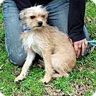 Adopt A Pet :: Michele T~B