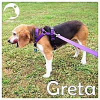 Adopt A Pet :: Greta - Novi, MI
