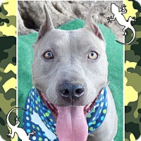 Adopt A Pet :: Janey Jane - Van Nuys, CA
