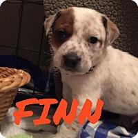 Adopt A Pet :: Finn - Rexford, NY