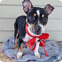 Adopt A Pet :: Geraldine - Baton Rouge, LA