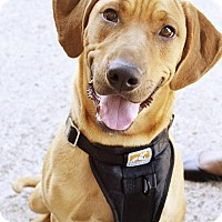 Adopt A Pet :: Shelby - Homewood, AL
