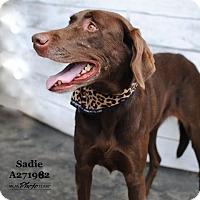 Adopt A Pet :: SADIE - Conroe, TX