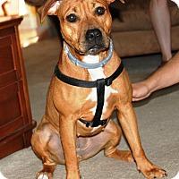 Adopt A Pet :: Boo - Nolensville, TN