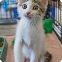 Adopt A Pet :: Rainey Mae - Merrifield, VA