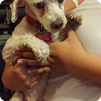 Adopt A Pet :: Yanni- Adoption Pending - Fairfield, OH