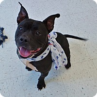 Adopt A Pet :: Forest - Chambersburg, PA