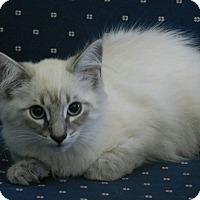 Adopt A Pet :: Drake - Davis, CA