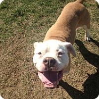 Adopt A Pet :: Kitty - Lubbock, TX