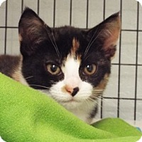 Adopt A Pet :: Ashley - Grants Pass, OR