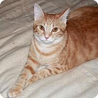 Adopt A Pet :: Cora - Saint Augustine, FL
