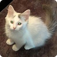 Adopt A Pet :: Effie - Woodstock, ON