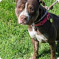 Adopt A Pet :: Toros - Cleveland, OH
