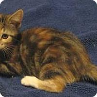 Adopt A Pet :: Reese - Davis, CA