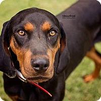 Adopt A Pet :: Denali - Harrisburg, PA
