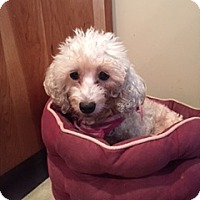 Adopt A Pet :: Trixie - N. Babylon, NY