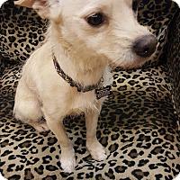Adopt A Pet :: Conny - Valencia, CA