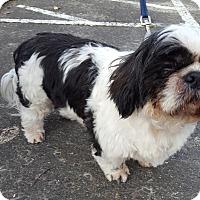 Adopt A Pet :: Dillon - Vancouver, WA