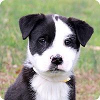 Adopt A Pet :: Hershey~adopted! - Glastonbury, CT