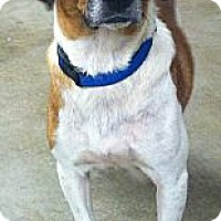 Adopt A Pet :: Charlotte - Nashville, TN