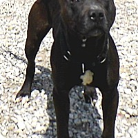 Adopt A Pet :: EZ - Washington Court House, OH