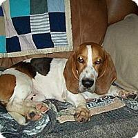 Adopt A Pet :: Bugsey - Columbia, SC