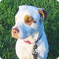Adopt A Pet :: Sasha - Orange Park, FL