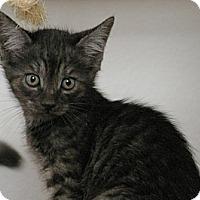 Adopt A Pet :: Winter - Sacramento, CA