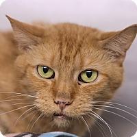 Adopt A Pet :: Picklehead - Chicago, IL