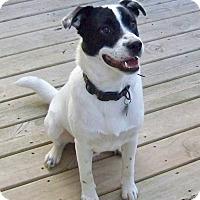 Adopt A Pet :: Leonardo- Indiana - Wood Dale, IL