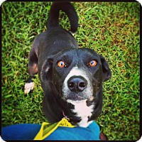 Adopt A Pet :: Lucky - Nashville, TN