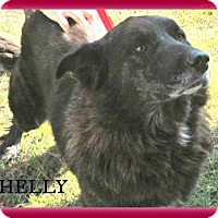 Adopt A Pet :: Shelly - Benton, AR