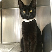 Adopt A Pet :: Esmerelda - East Brunswick, NJ
