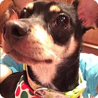 Adopt A Pet :: Freckles - S. Pasedena, FL