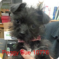 Adopt A Pet :: Peggy Sue - baltimore, MD