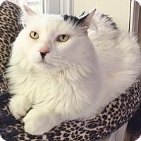 Adopt A Pet :: Eloise - Salisbury, MA