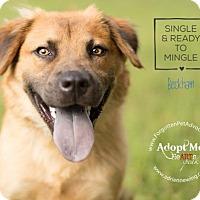Adopt A Pet :: Beckham - Pearland, TX
