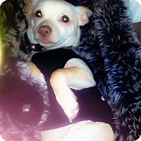 Adopt A Pet :: Piglet - Torrington, WY