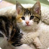 Adopt A Pet :: Margarita - Tucson, AZ