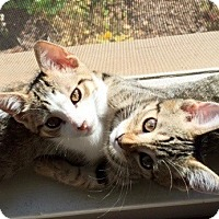Adopt A Pet :: Kiley and Riley - Novato, CA
